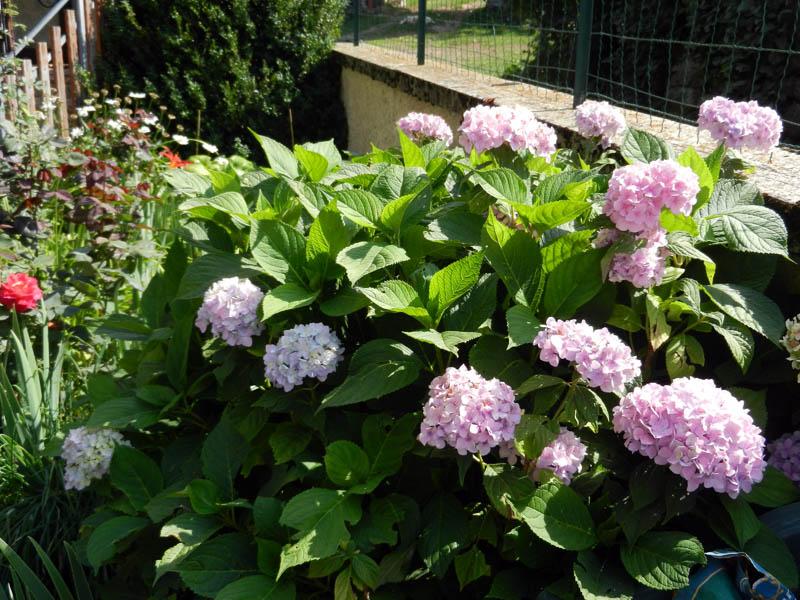 Fleurs de mon jardin 2012-911
