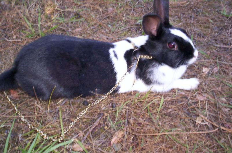 [Animaux] Photos de vos animaux - Page 2 42010