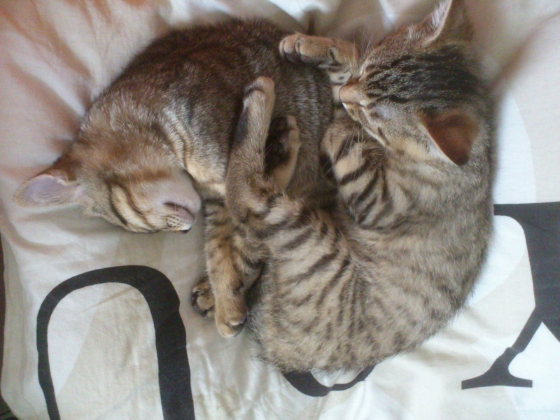 Ilette (renommée Kaya) et Imiami (renommée Inoo) Dsc_0416