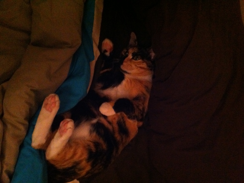 FICELLE et YUMI (Nosy Be) - Page 3 Img_0410