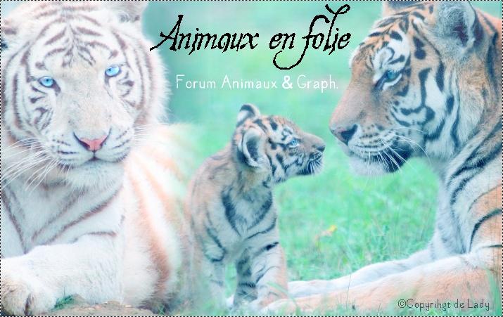 Le Prochain Thème version tigres.  Banier24