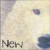 theme Septembre 1012 ( loup beige ) Vii1010