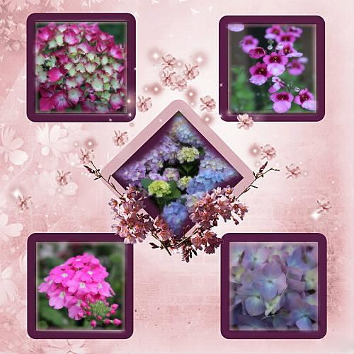 Photos de nos jardins - Page 2 Fleurs10