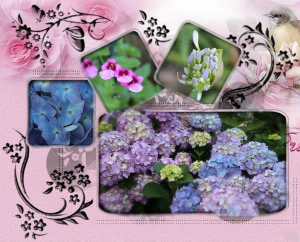 Photos de nos jardins - Page 2 Fleurs11