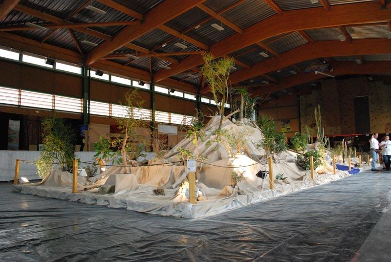 Le décor végétalisé de la Saint-Hip'aux cactus 2010 Dacor_11