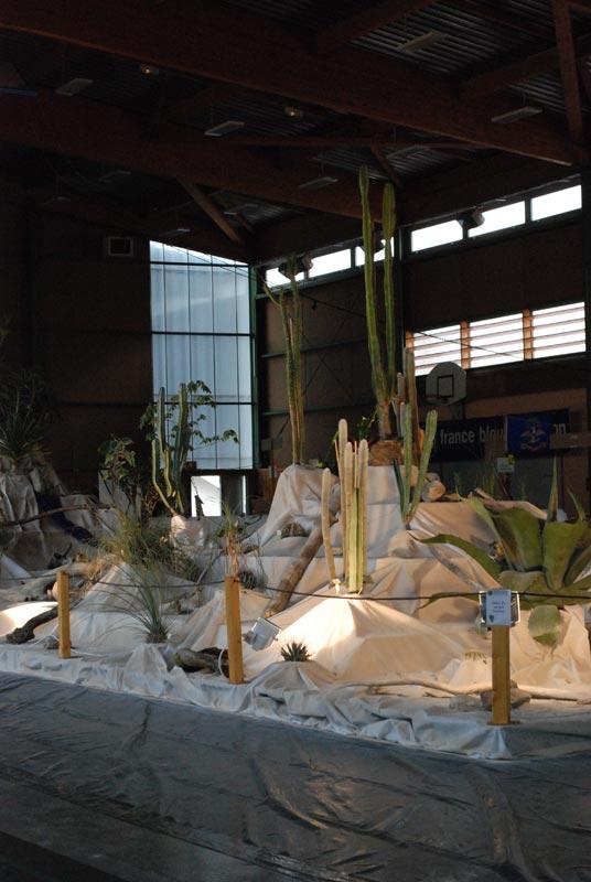Le décor végétalisé de la Saint-Hip'aux cactus 2010 Dacor_15