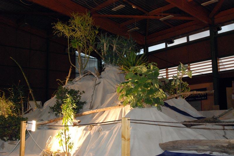 Le décor végétalisé de la Saint-Hip'aux cactus 2010 Dacor_16