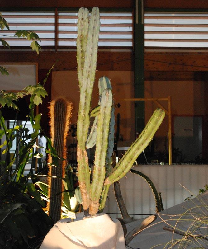 Le décor végétalisé de la Saint-Hip'aux cactus 2010 Dacor_17