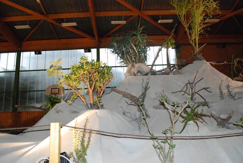 Le décor végétalisé de la Saint-Hip'aux cactus 2010 Dacor_18