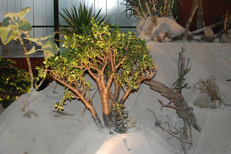 Le décor végétalisé de la Saint-Hip'aux cactus 2010 Dacor_19