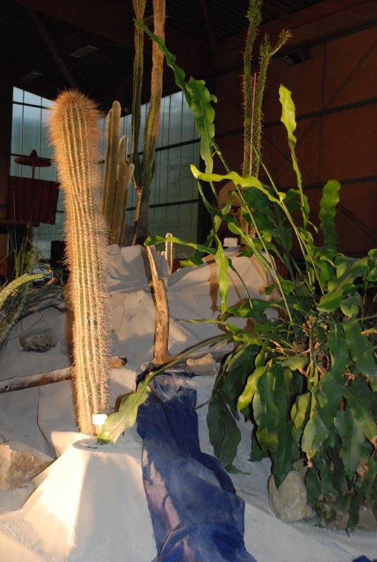 Le décor végétalisé de la Saint-Hip'aux cactus 2010 Dacor_21