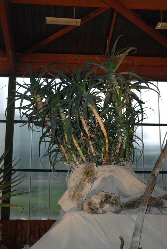 Le décor végétalisé de la Saint-Hip'aux cactus 2010 Dacor_22