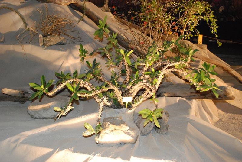 Le décor végétalisé de la Saint-Hip'aux cactus 2010 Dacor_23