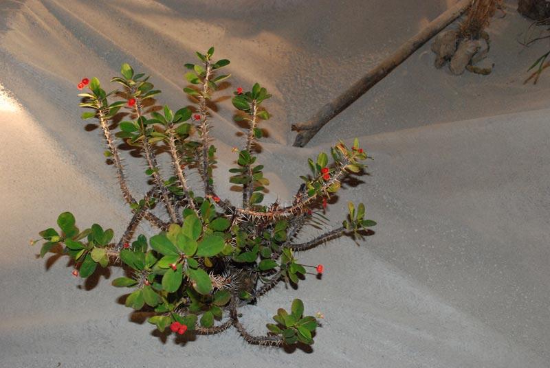 Le décor végétalisé de la Saint-Hip'aux cactus 2010 Dacor_24