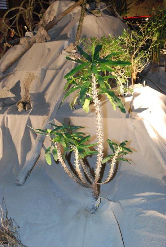 Le décor végétalisé de la Saint-Hip'aux cactus 2010 Dacor_27