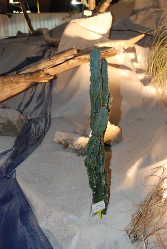 Le décor végétalisé de la Saint-Hip'aux cactus 2010 Dacor_28