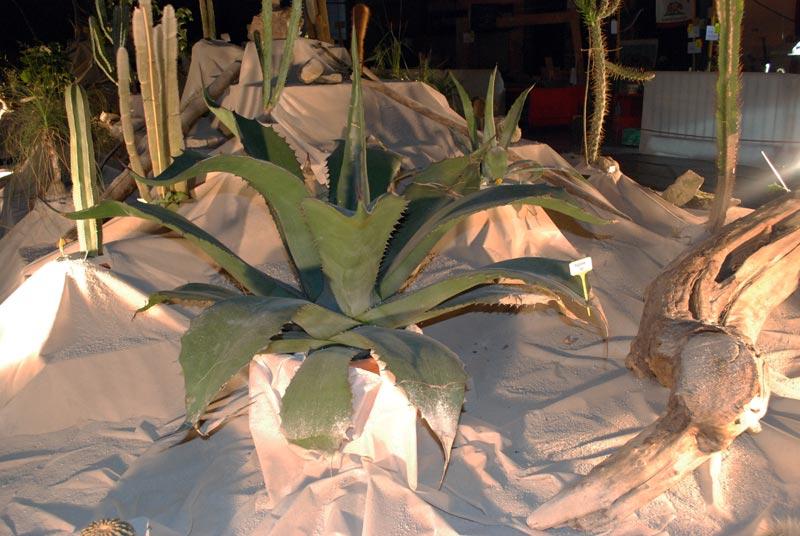 Le décor végétalisé de la Saint-Hip'aux cactus 2010 Dacor_29