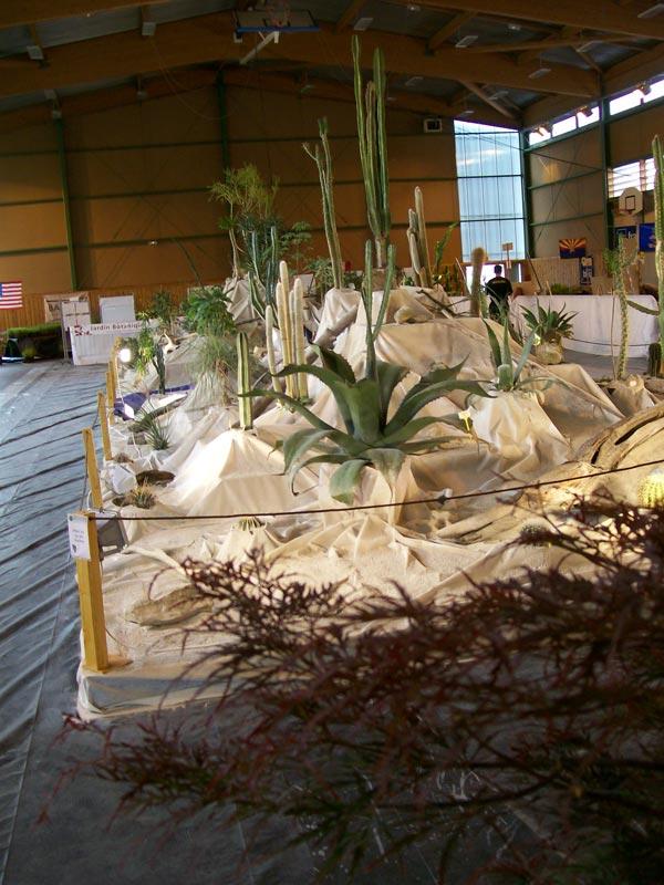 Le décor végétalisé de la Saint-Hip'aux cactus 2010 Dacor_31