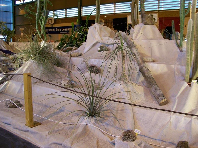 Le décor végétalisé de la Saint-Hip'aux cactus 2010 Dacor_34