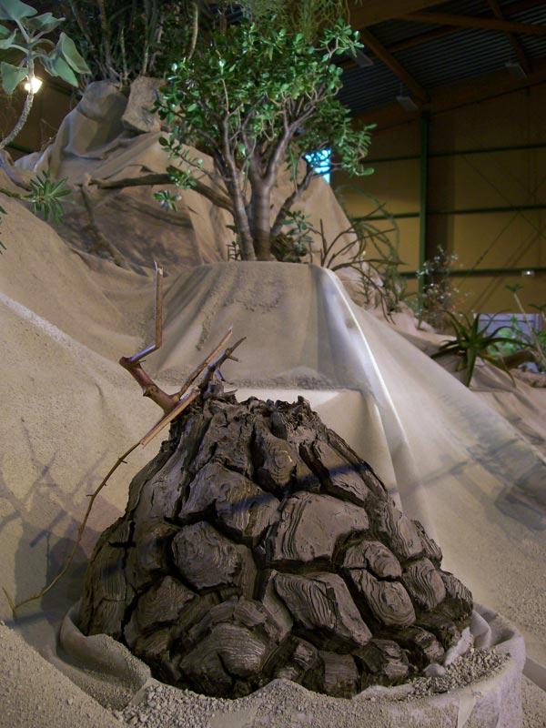 Le décor végétalisé de la Saint-Hip'aux cactus 2010 Dacor_35