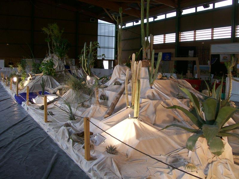 Le décor végétalisé de la Saint-Hip'aux cactus 2010 Dacor_41