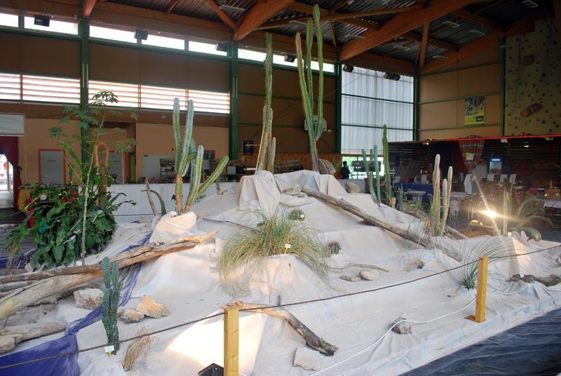 Le décor végétalisé de la Saint-Hip'aux cactus 2010 Dacor_43