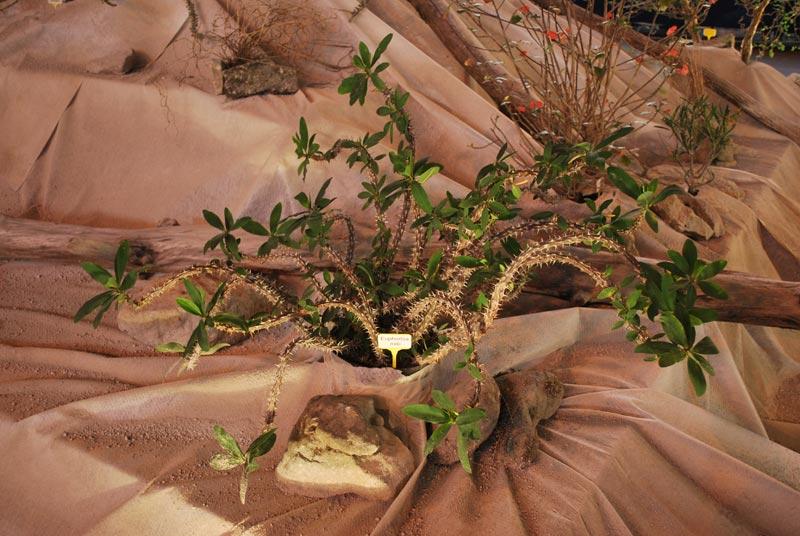Le décor végétalisé de la Saint-Hip'aux cactus 2010 Dacor_45