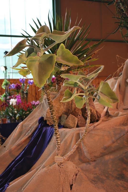 Le décor végétalisé de la Saint-Hip'aux cactus 2010 Dacor_46