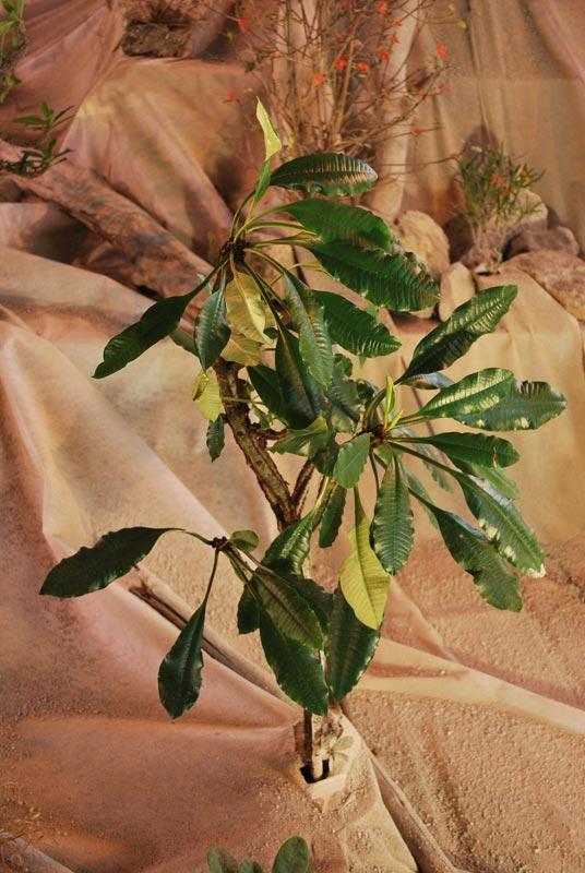 Le décor végétalisé de la Saint-Hip'aux cactus 2010 Dacor_47