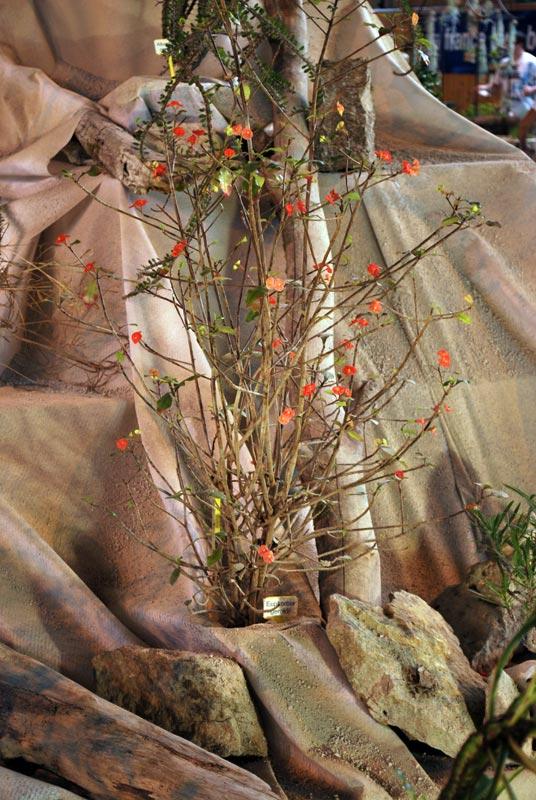 Le décor végétalisé de la Saint-Hip'aux cactus 2010 Dacor_48