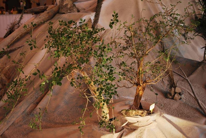 Le décor végétalisé de la Saint-Hip'aux cactus 2010 Dacor_49