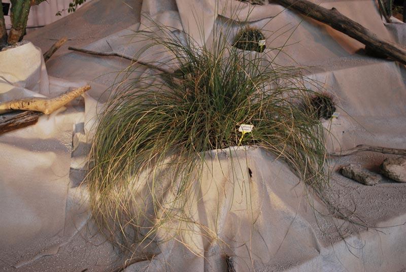 Le décor végétalisé de la Saint-Hip'aux cactus 2010 Dacor_50