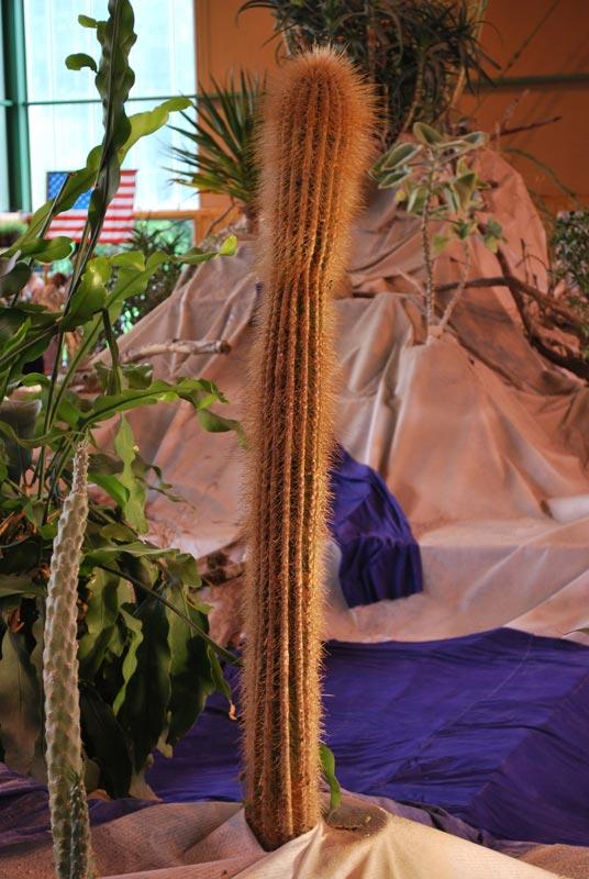 Le décor végétalisé de la Saint-Hip'aux cactus 2010 Dacor_51