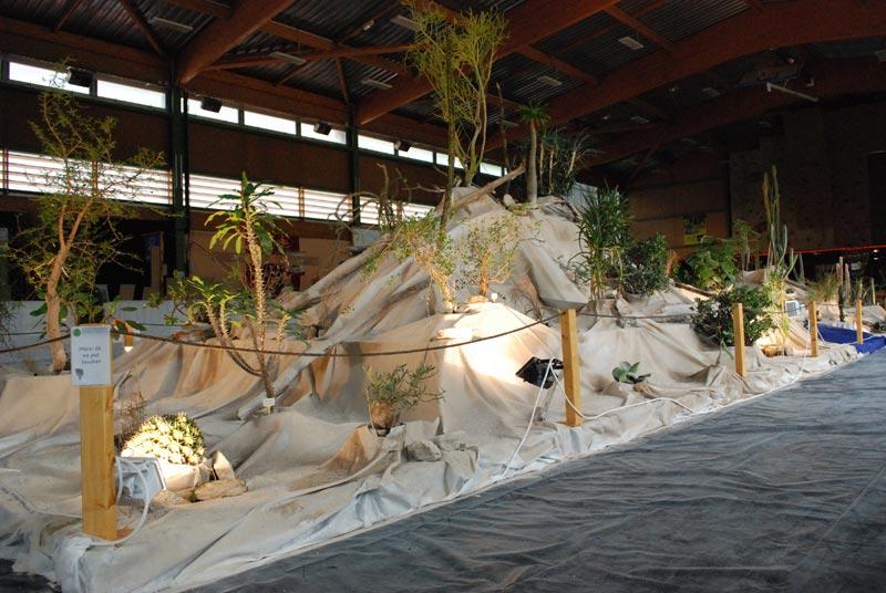 Le décor végétalisé de la Saint-Hip'aux cactus 2010 Dacor_53