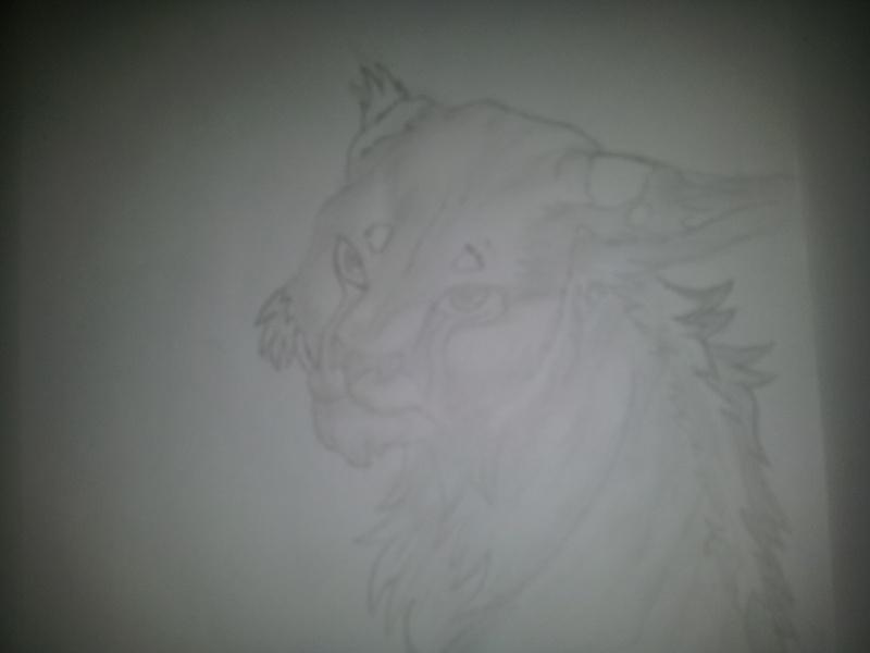 Dessin Lynx 20120810