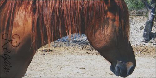 ♣ photos de vous à cheval - Page 3 111