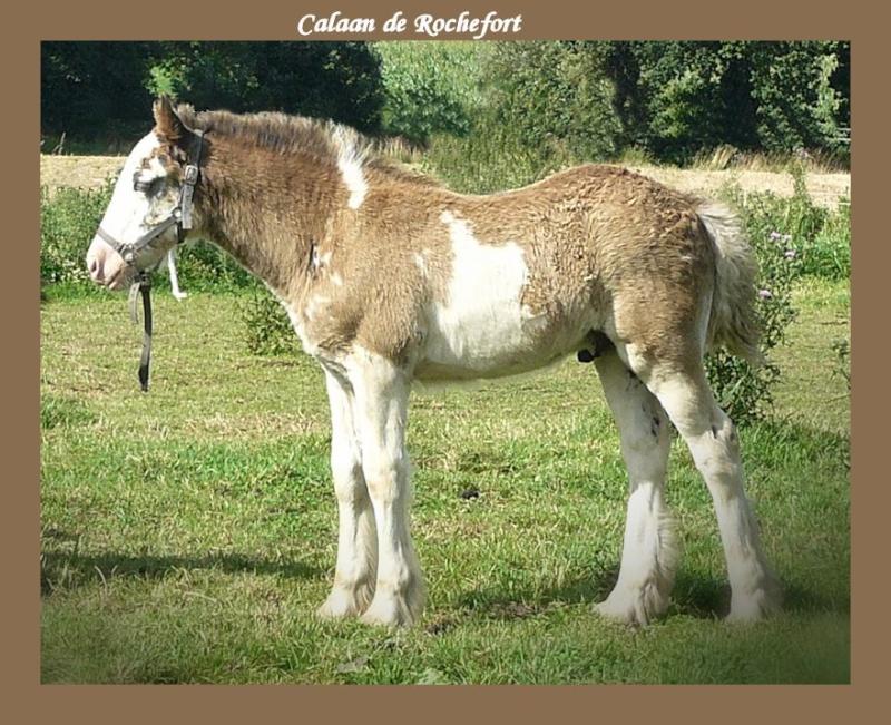 Calaan de Rochefort ! Peachy X Nessie !!!!!! Calaan12