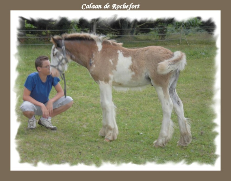 Calaan de Rochefort ! Peachy X Nessie !!!!!! Calaan15