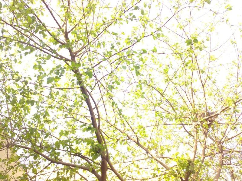 Snaps Taken by Me Image011