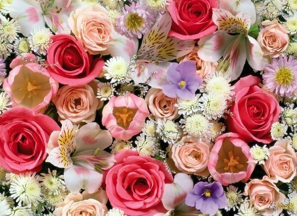 Pershendetje me nje lule per nje anëtarë? - Faqe 5 0122