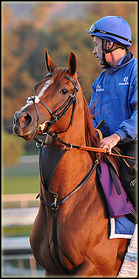saillie - douct christaal x sassy coral (28.07.2010) N210