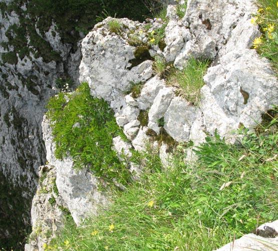La section Vosges-Alsace-Lorraine de la SAJA - Page 2 Img_1221