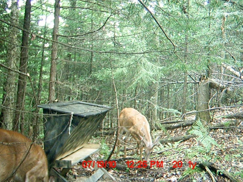Pour les intéressés: deerfeeder Mdgc0012