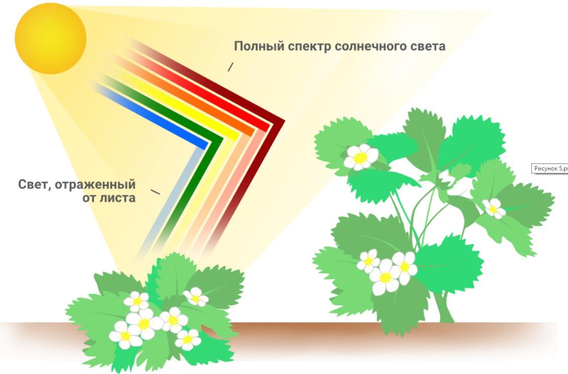 Свет для растений 1210