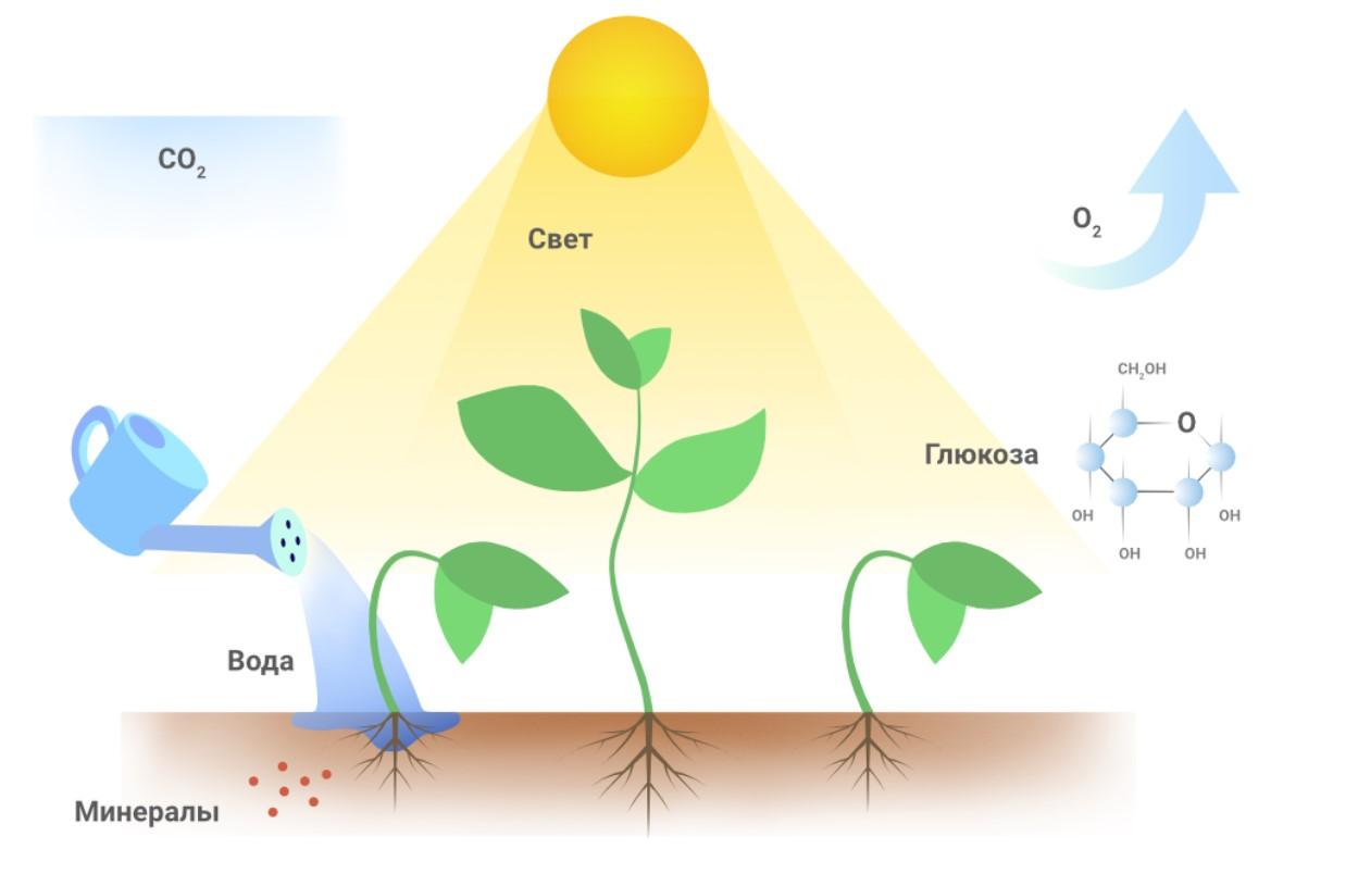 Свет для растений 8a10