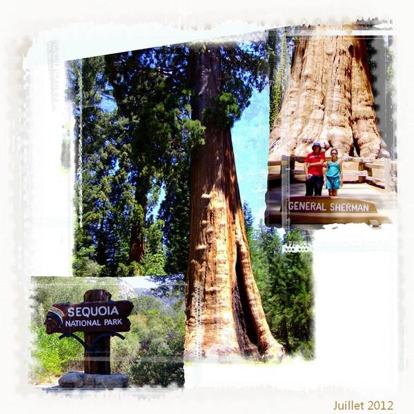 Challenge Visiteurs du 1 au 15 Août 2012 maj 10/8/2012 9h17 Saquoi10