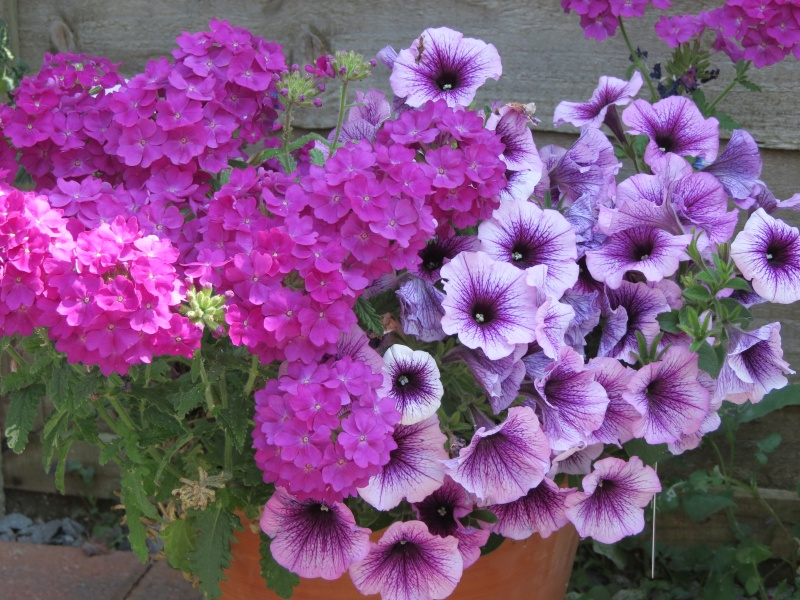 Summer Flowers/Pictures 2013 Kian_127