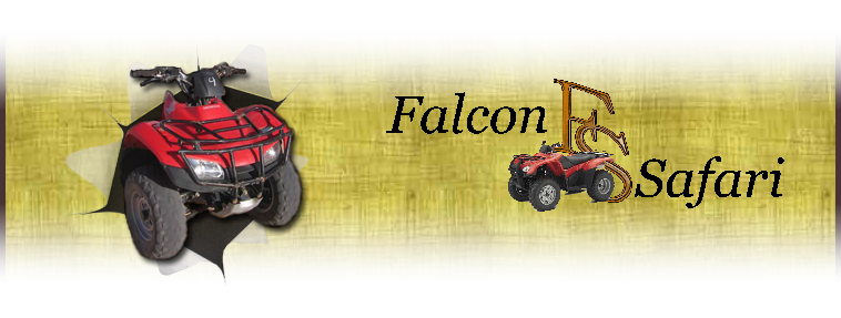 Falcon Safari