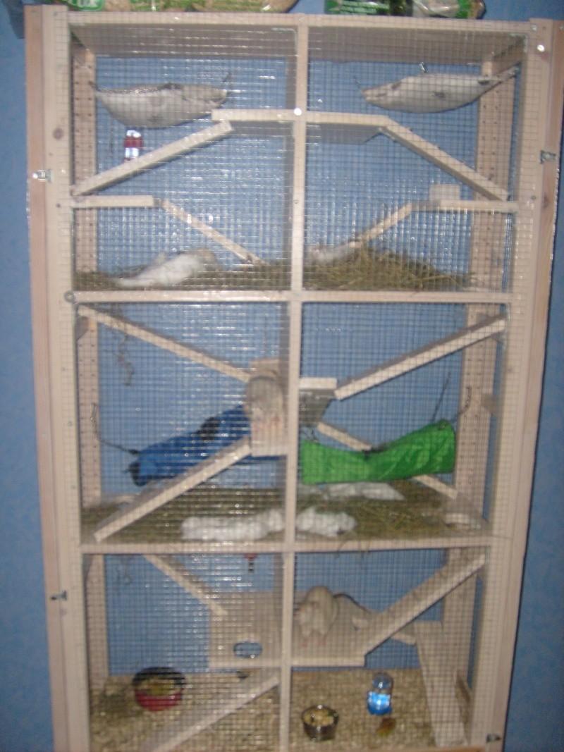 Vente grande cage 01 S6300710