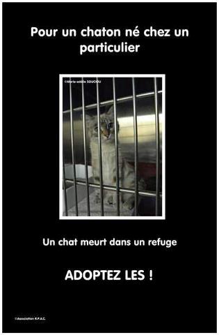 présentation Adopte10